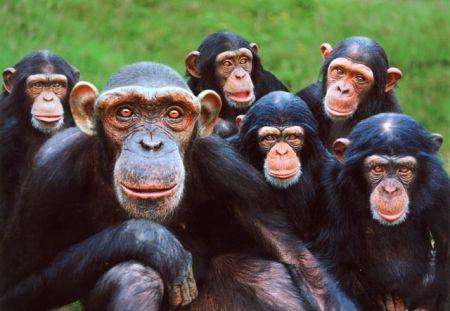 romani rampicandi - Pagina 6 Primates3_38681